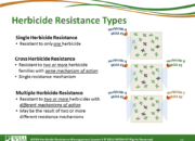 Slide13.PNG lesson3 180x130 - What Is Herbicide Resistance?