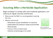 Slide4.PNG lesson4 180x130 - Scouting After a Herbicide Application and Confirming Herbicide Resistance