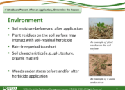 Slide9.PNG lesson4 180x130 - Scouting After a Herbicide Application and Confirming Herbicide Resistance
